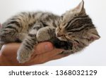 Stock photo little cat while sleeping 1368032129