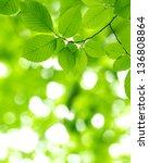 green leaves over green...   Shutterstock . vector #136808864