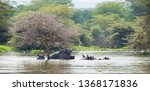hippos are swimming in water.... | Shutterstock . vector #1368171836
