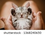 Stock photo little cute home gray striped kitten in hand cute little kitten with owner at home closeup very 1368240650