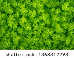 close up of a texture of green... | Shutterstock . vector #1368312293