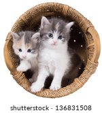 Stock photo two blue eyed fluffy kitten in a basket isolated on a white background 136831508