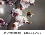 Flight Of A Bumblebee Over A...