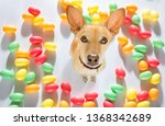 easter bunny sausage dachshund...   Shutterstock . vector #1368342689
