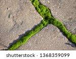 moss  bryophyta   vivid green...   Shutterstock . vector #1368359099
