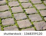 moss  bryophyta   vivid green...   Shutterstock . vector #1368359120