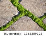 moss  bryophyta   vivid green...   Shutterstock . vector #1368359126