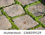 moss  bryophyta   vivid green...   Shutterstock . vector #1368359129