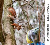 small squirrel looks at boy in... | Shutterstock . vector #1368399029
