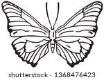 butterfly   retro ad art...   Shutterstock .eps vector #1368476423