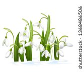 Snowdrop. Bouquet Of Snowdrops. ...
