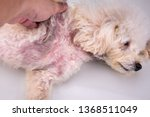 pet dog body with red irritated ... | Shutterstock . vector #1368511049