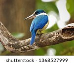 the collared kingfisher on... | Shutterstock . vector #1368527999