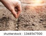 close up of farmer's hands ... | Shutterstock . vector #1368567500
