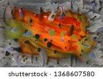 lava fire  orange red gray... | Shutterstock . vector #1368607580
