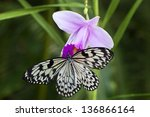 Paper Kite Or Rice Butterfly ...