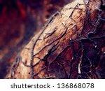 Unusual Tree Roots