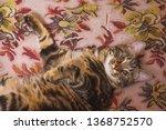 portrait of a cute cat. pussy...   Shutterstock . vector #1368752570