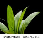 Isolated Palm Leafs.....