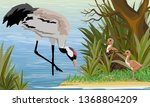 gray crane in a swamp or lake... | Shutterstock .eps vector #1368804209