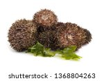 gray sea urchins on alga | Shutterstock . vector #1368804263