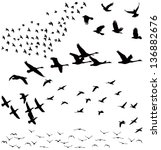 Vector Silhouettes  A Flock Of...