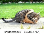 Stock photo cats fighting 136884764