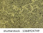 green duckweed covered with... | Shutterstock . vector #1368924749