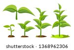 saplings  sprouts growth stages ... | Shutterstock .eps vector #1368962306