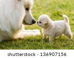 Stock photo two dogs in the grasslands play 136907156