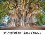 El Tule  The Biggest Tree Of...
