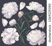 set of floral elements with... | Shutterstock .eps vector #1369229390