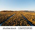 birdwatching spot in helsinki ... | Shutterstock . vector #1369253930