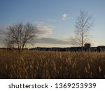 birdwatching spot in helsinki ... | Shutterstock . vector #1369253939