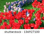 colorful spring flowers tulips... | Shutterstock . vector #136927100