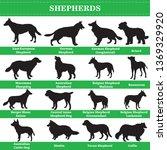 set of 20 shepherds dogs.... | Shutterstock .eps vector #1369329920