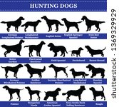 set of 20 hunting dogs. vector... | Shutterstock .eps vector #1369329929