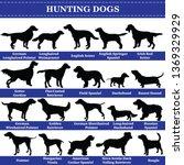 set of 20 hunting dogs. vector... | Shutterstock .eps vector #1369329929