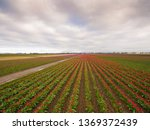 aerial view of the colorful... | Shutterstock . vector #1369372439