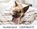 Portrait Of Embarrassed Dog...
