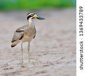 beautiful bird  great thick... | Shutterstock . vector #1369433789