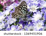 the name of the butterfly is... | Shutterstock . vector #1369451906