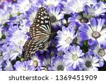 the name of the butterfly is... | Shutterstock . vector #1369451909