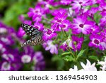 the name of the butterfly is... | Shutterstock . vector #1369454903