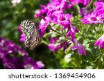 the name of the butterfly is... | Shutterstock . vector #1369454906