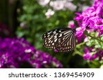 the name of the butterfly is... | Shutterstock . vector #1369454909