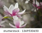 beautifully blooming spring...   Shutterstock . vector #1369530650