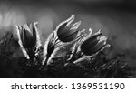 springtime season. beautifully...   Shutterstock . vector #1369531190