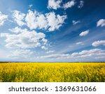 yellow canola field in sunlight.... | Shutterstock . vector #1369631066