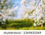 attractive ornamental garden... | Shutterstock . vector #1369631069